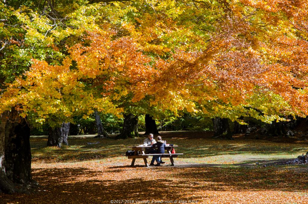 livata faggeta autunno famiglia picnic