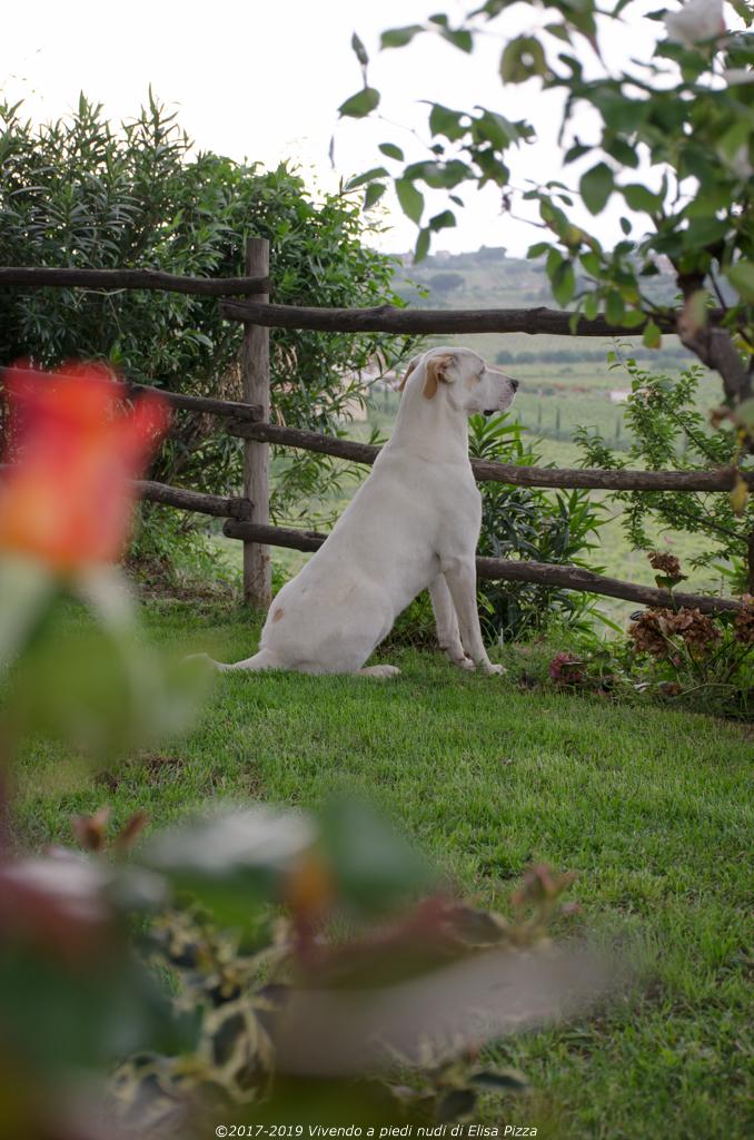 terre vino ospitali merumalia cane